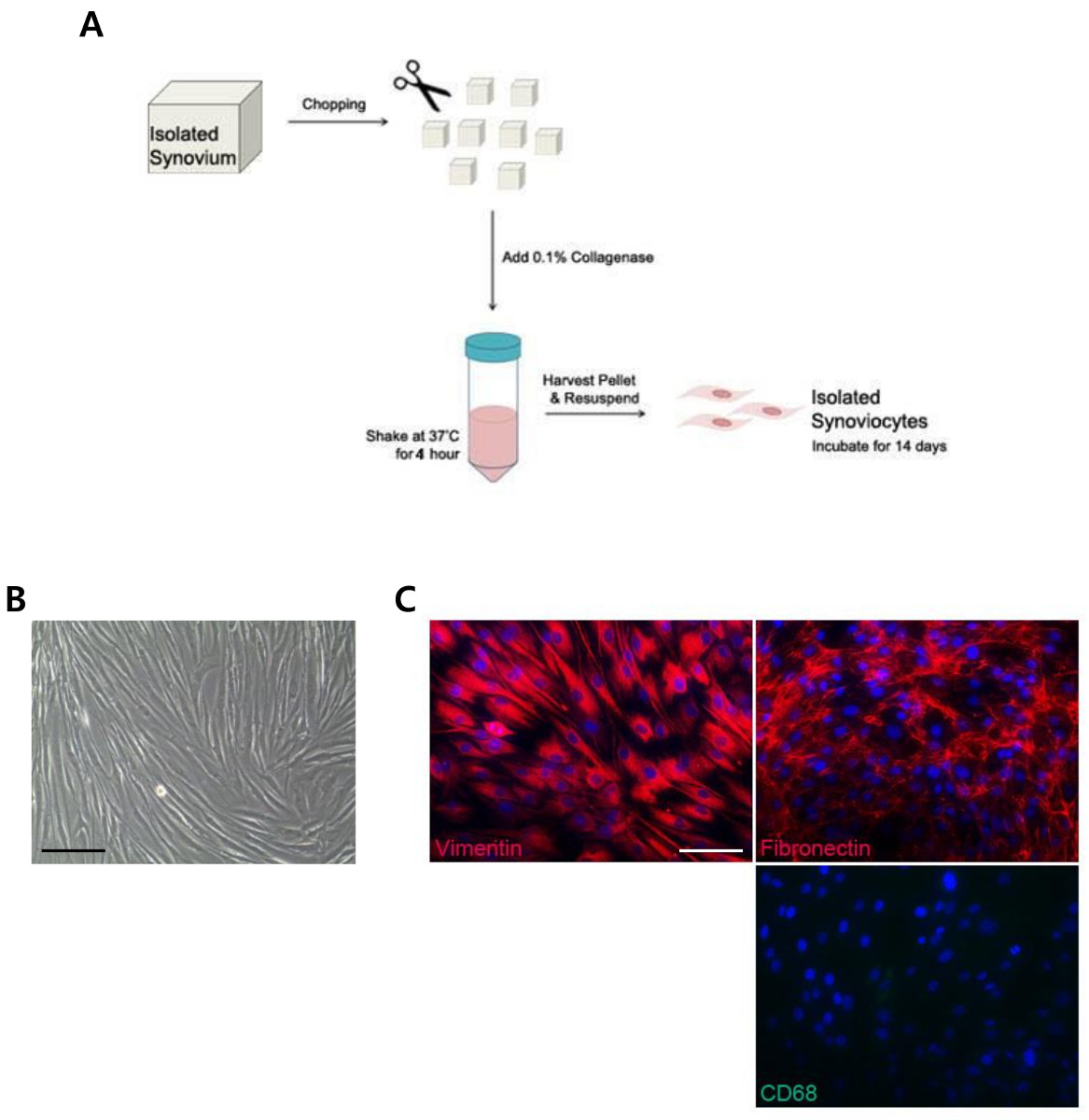 Generation of Induced-pluripotent Stem Cells Using