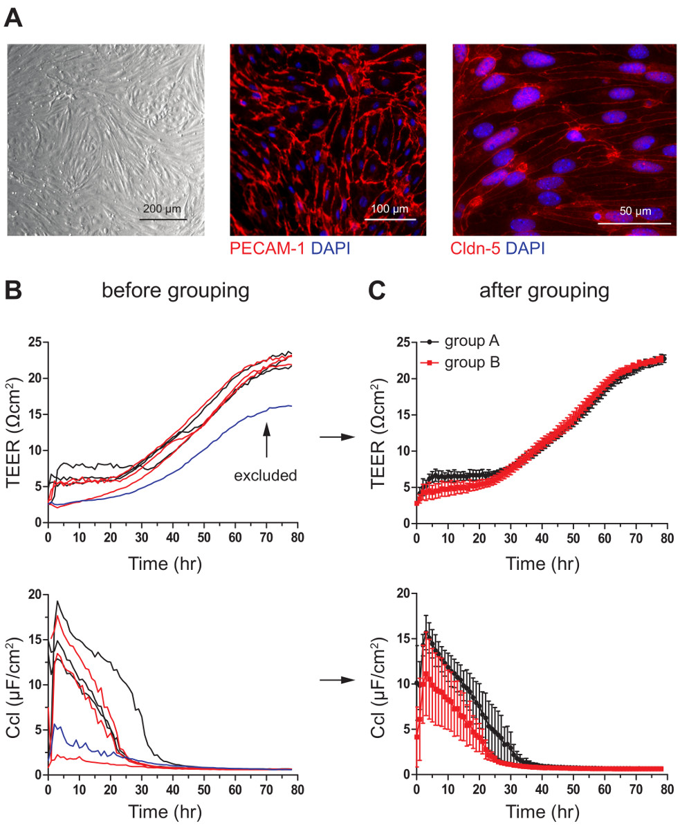An In Vitro Model of the Blood-brain Barrier Using Impedance