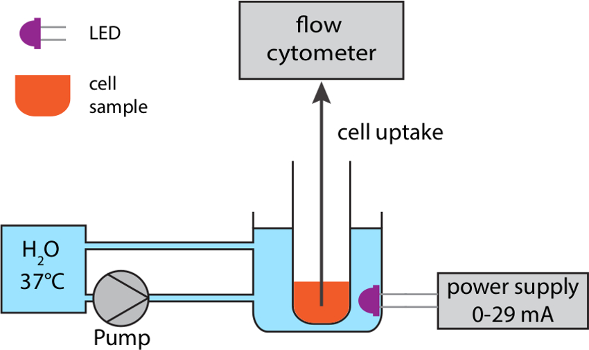 LED Thermo Flow — Combining Optogenetics with Flow Cytometry