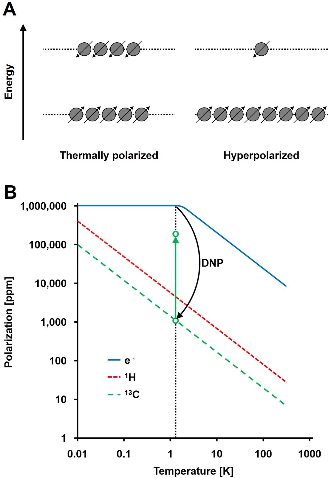 Hyperpolarized 13C Metabolic Magnetic Resonance Spectroscopy
