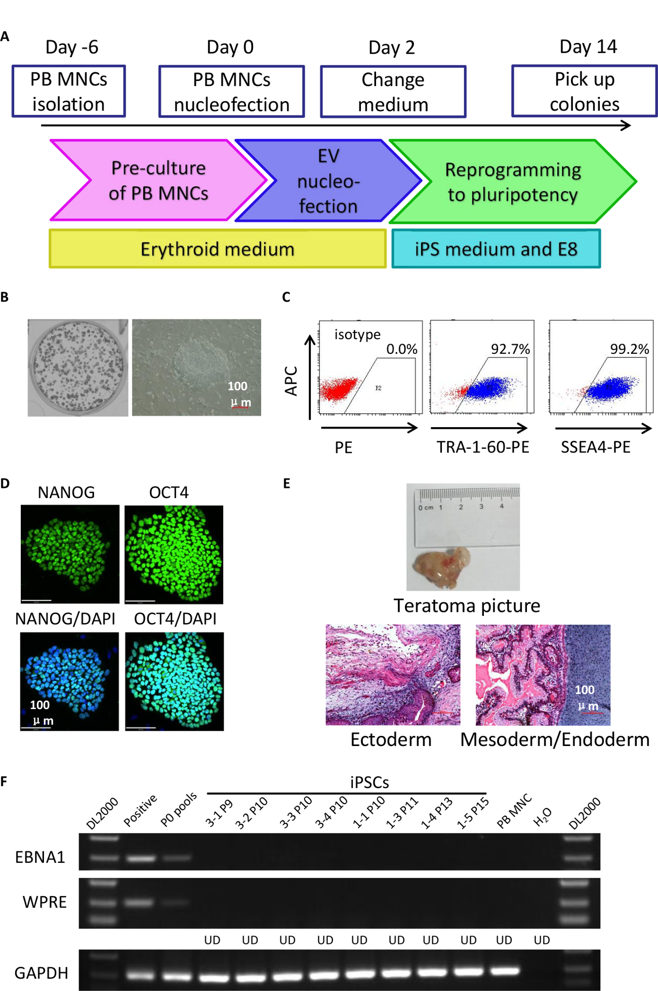 Generation of Integration-free Induced Pluripotent Stem Cells from