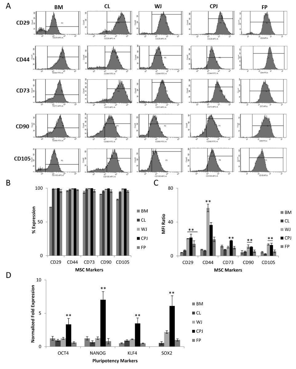 Isolation and Characterization of Mesenchymal Stromal Cells from