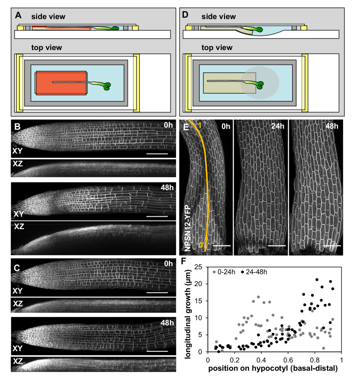 A Simple Chamber for Long-term Confocal Imaging of Root and