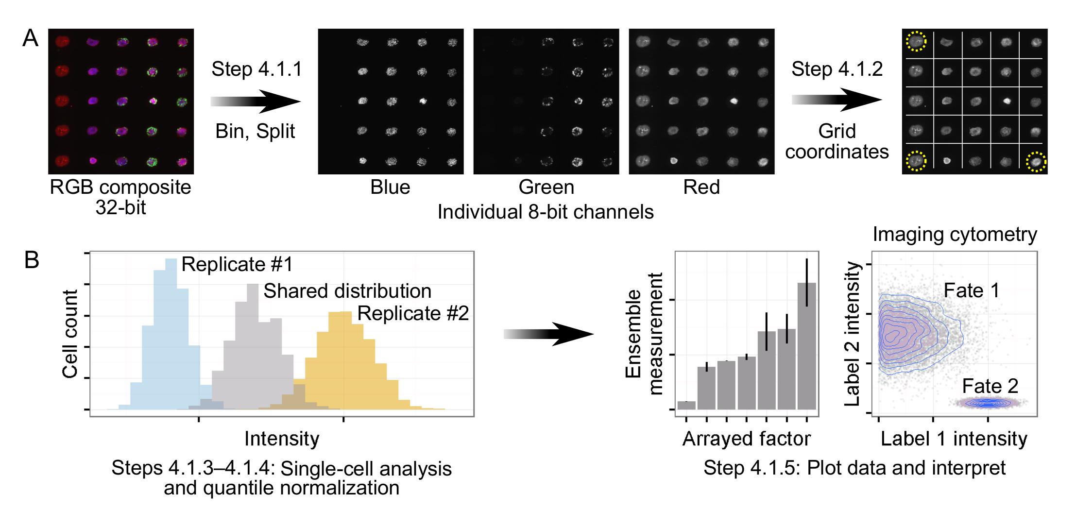 A High-throughput Cell Microarray Platform for Correlative
