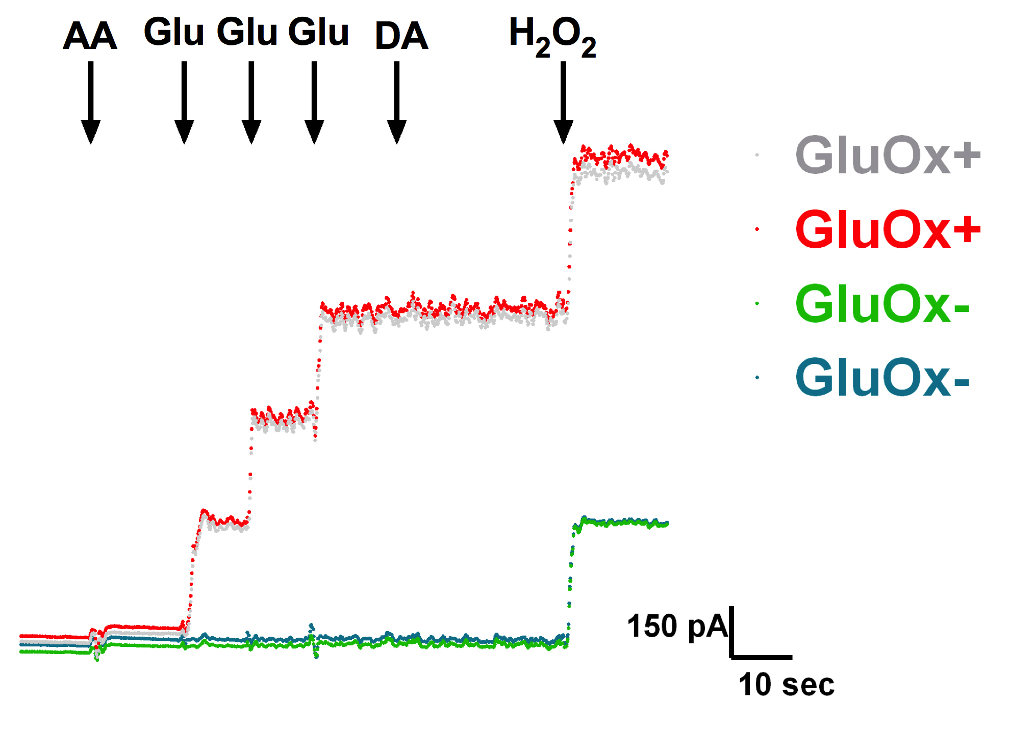 Using Enzyme-based Biosensors to Measure Tonic and Phasic Glutamate