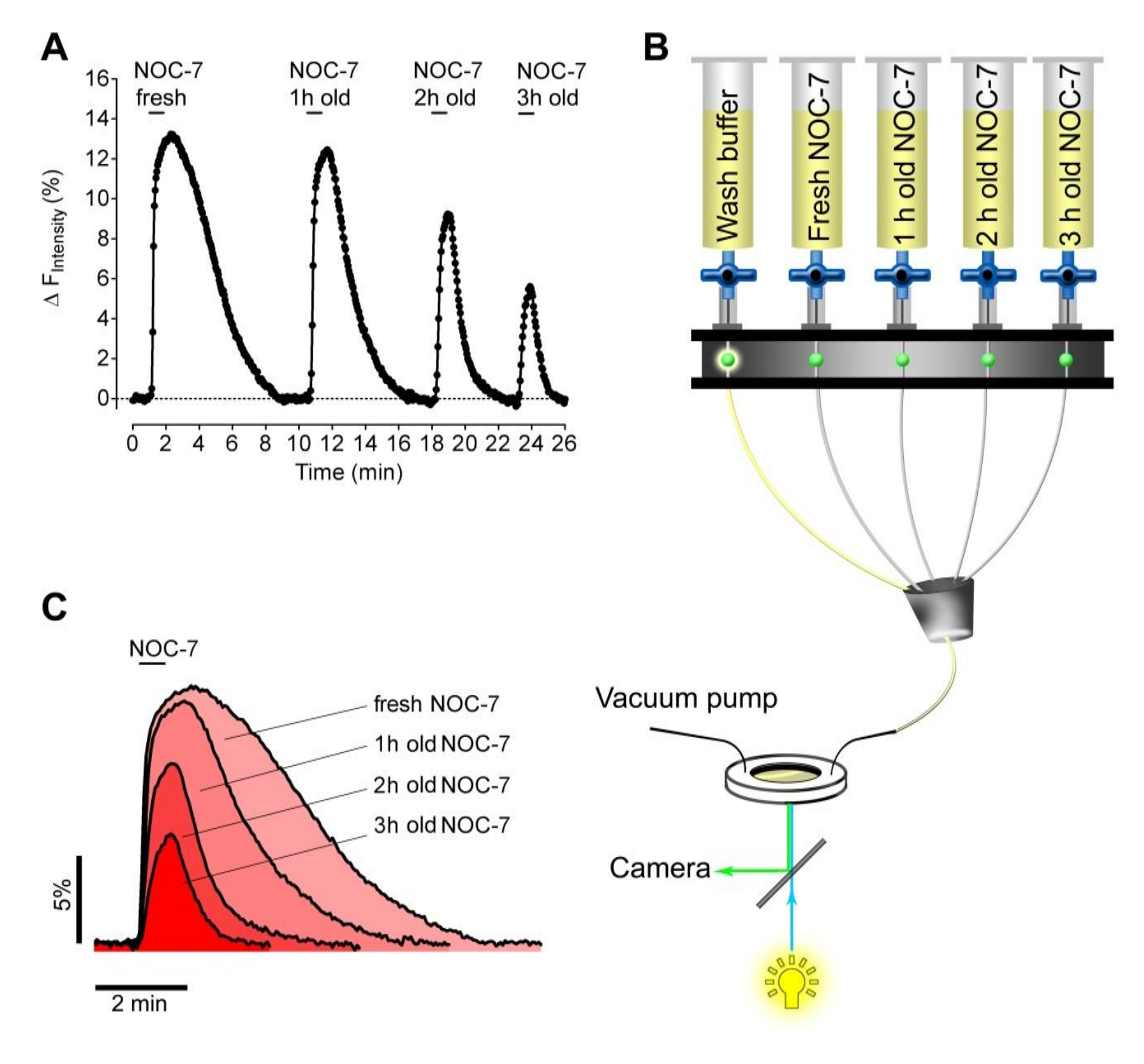 Application of Genetically Encoded Fluorescent Nitric Oxide (NO