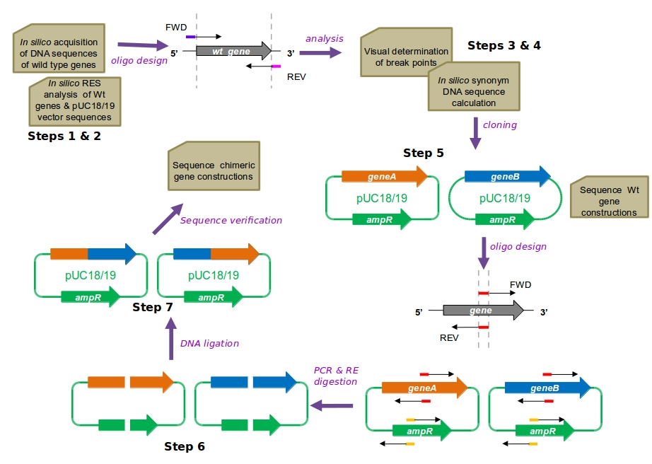 CAPRRESI: Chimera Assembly by Plasmid Recovery and Restriction