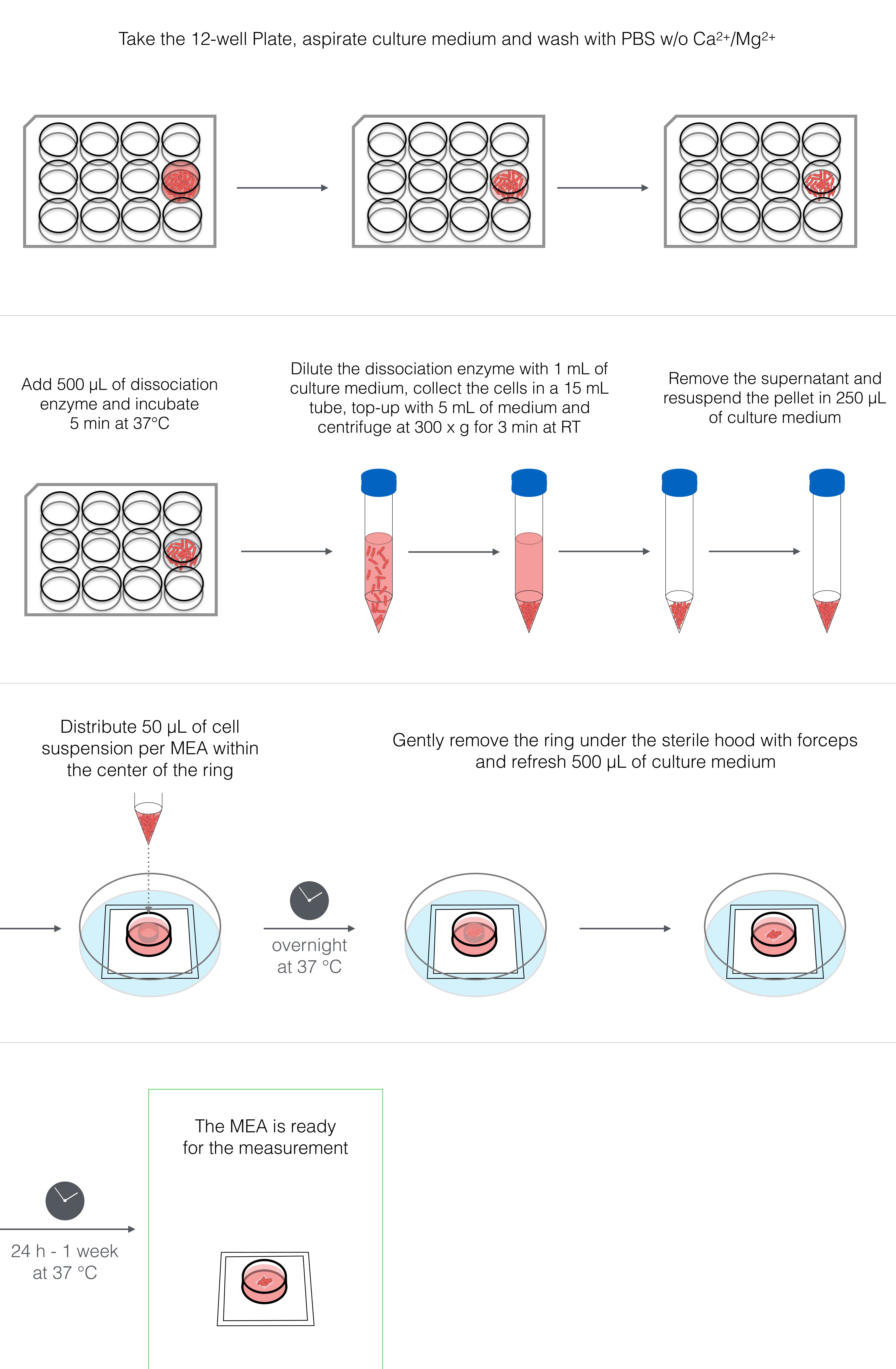 Electrophysiological Analysis of human Pluripotent Stem Cell