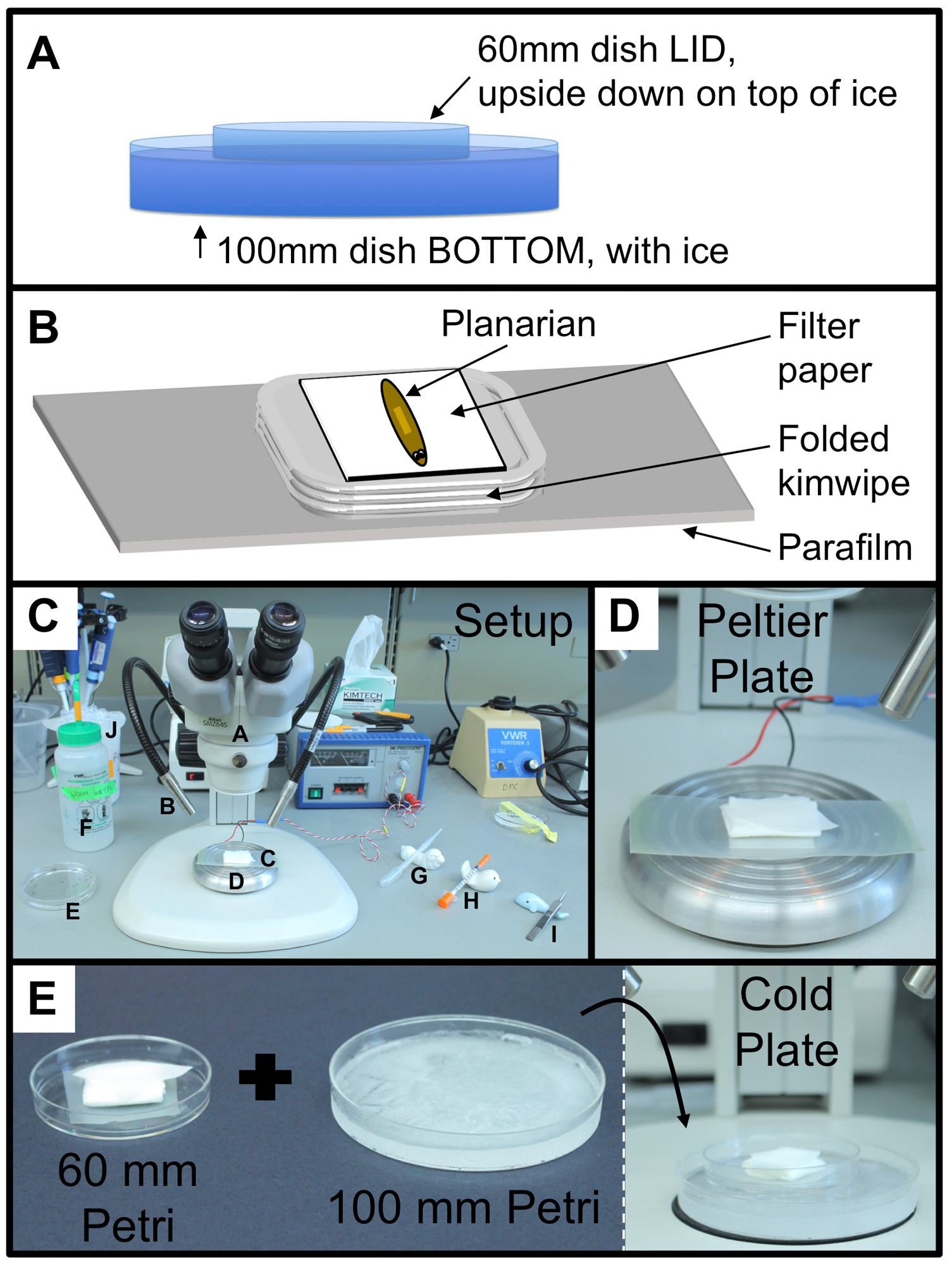 Surgical Ablation Assay for Studying Eye Regeneration in