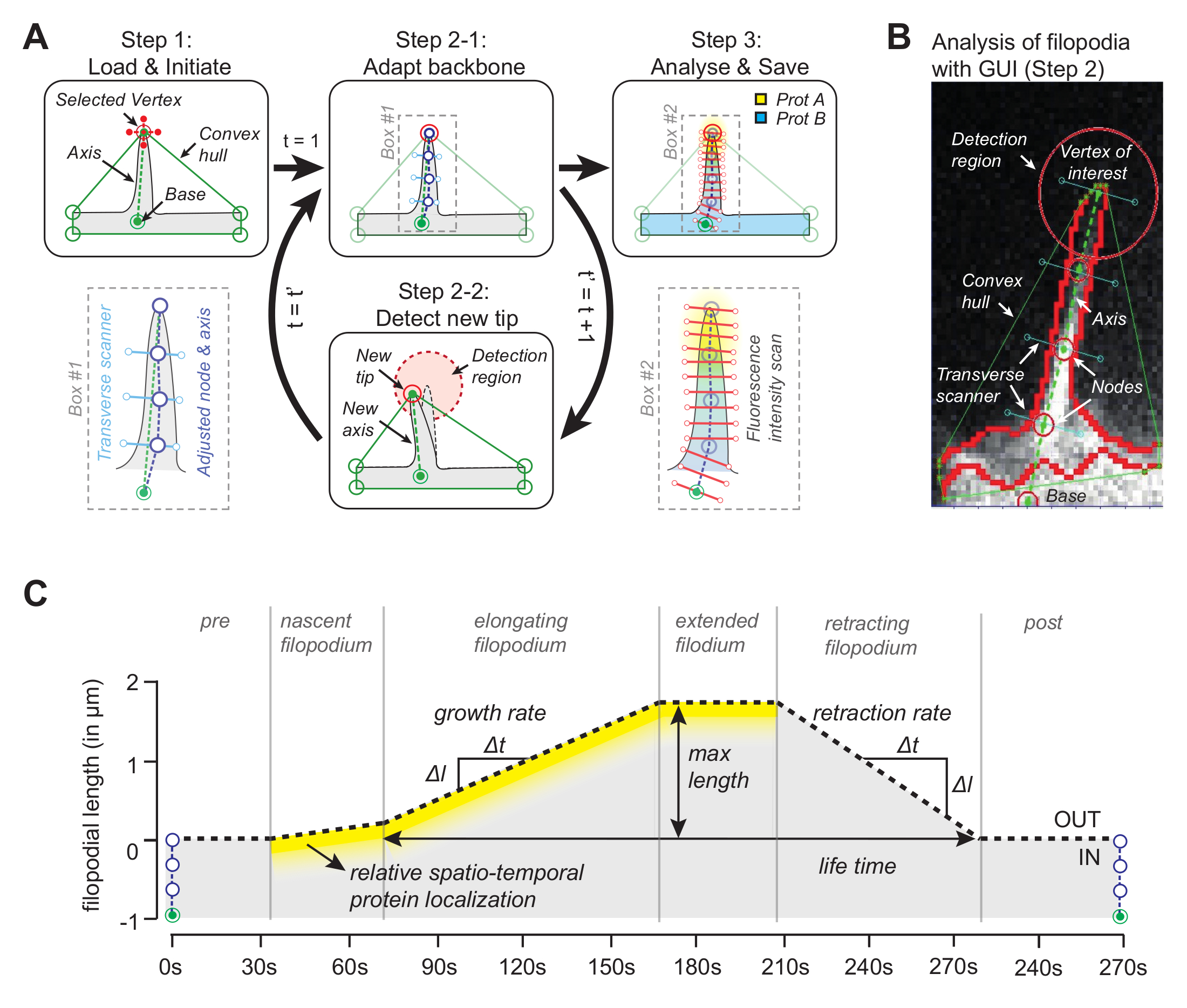 A Graphical User Interface for Software-assisted Tracking of Protein