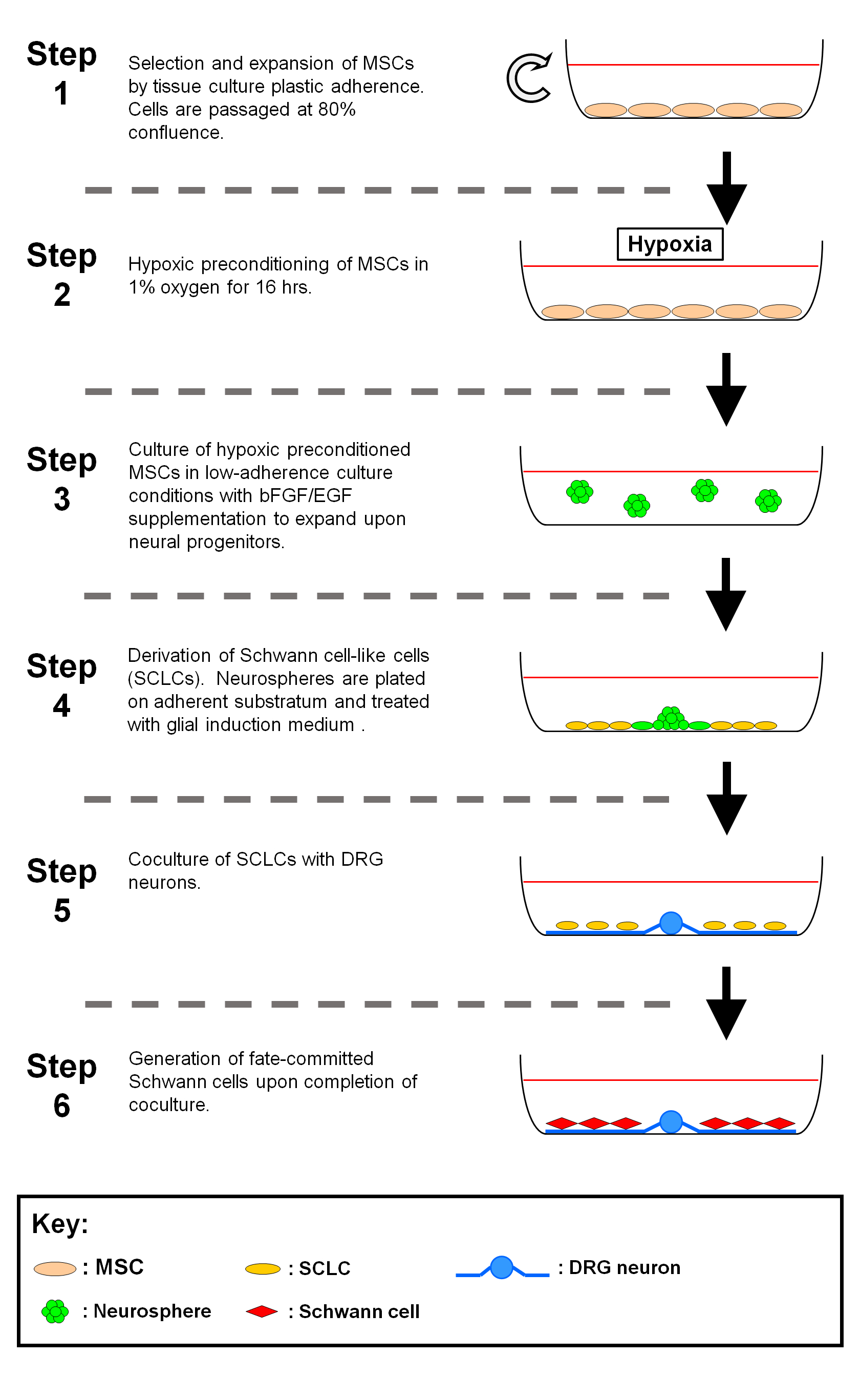 Hypoxic Preconditioning of Marrow-derived Progenitor Cells As a
