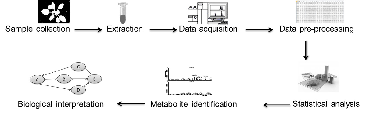 A Simple Fractionated Extraction Method For The Comprehensive