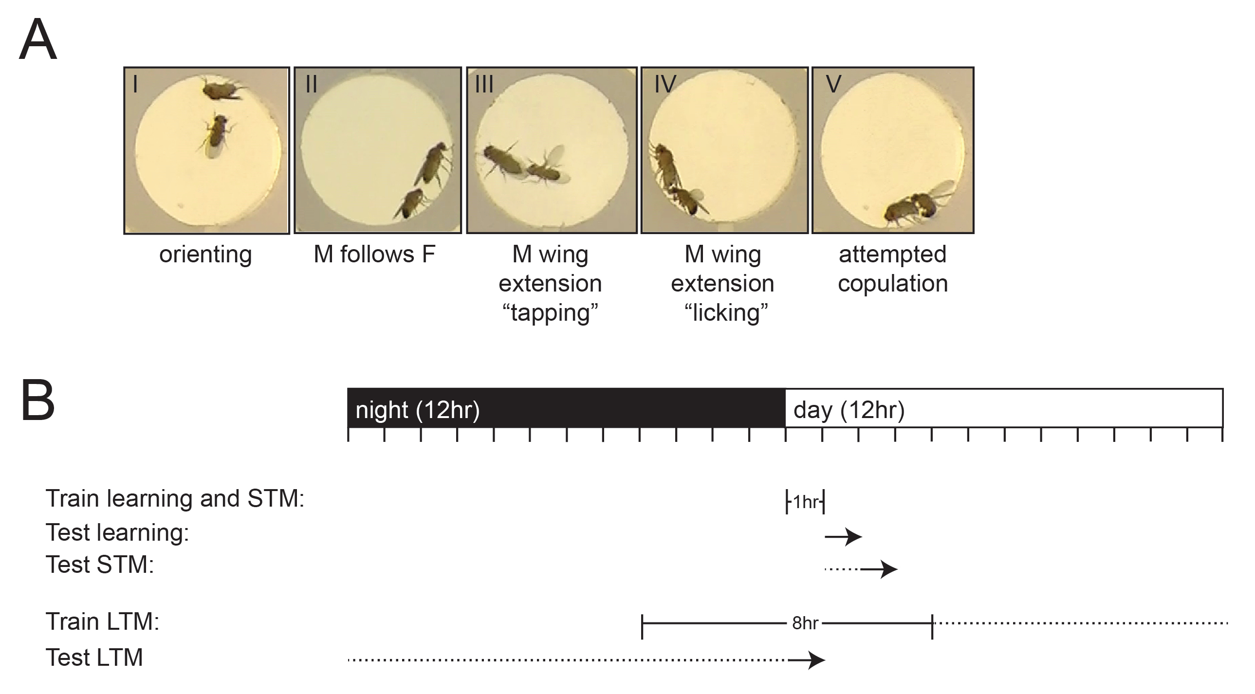 Drosophila Courtship Conditioning As a Measure of Learning and