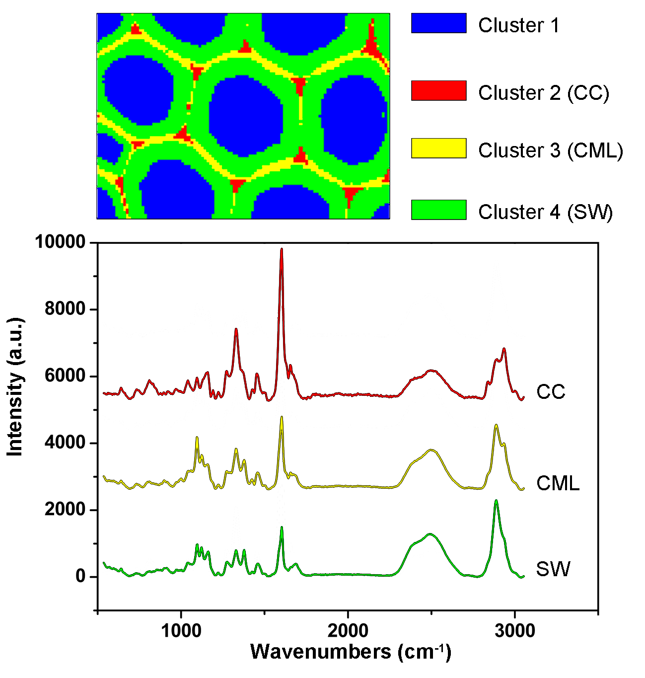 Combining Raman Imaging and Multivariate Analysis to Visualize