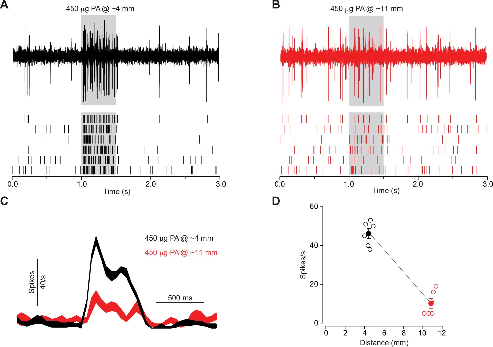 Electrophysiological Recording from Drosophila Trichoid Sensilla in
