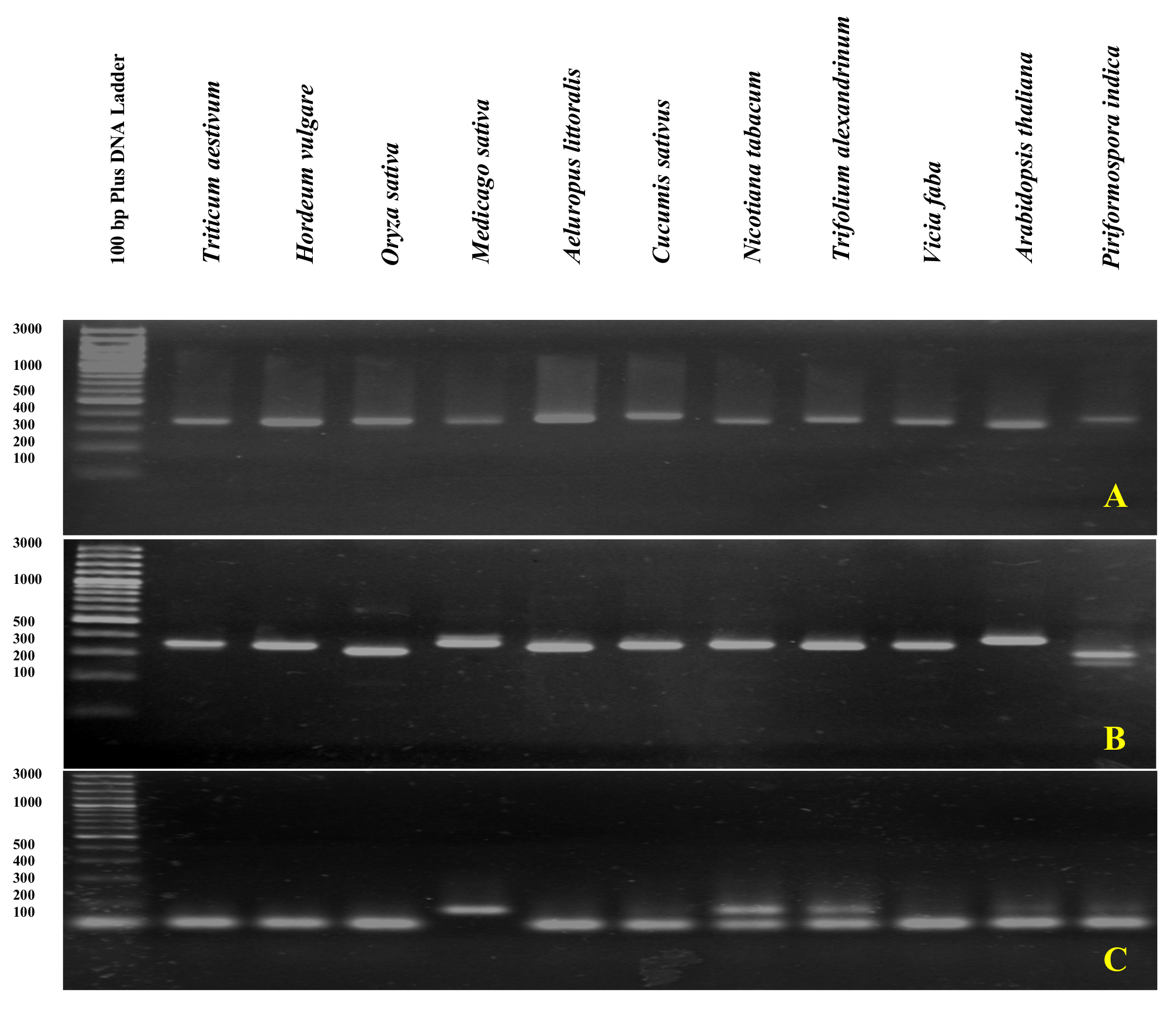 Assessment of DNA Contamination in RNA Samples Based on