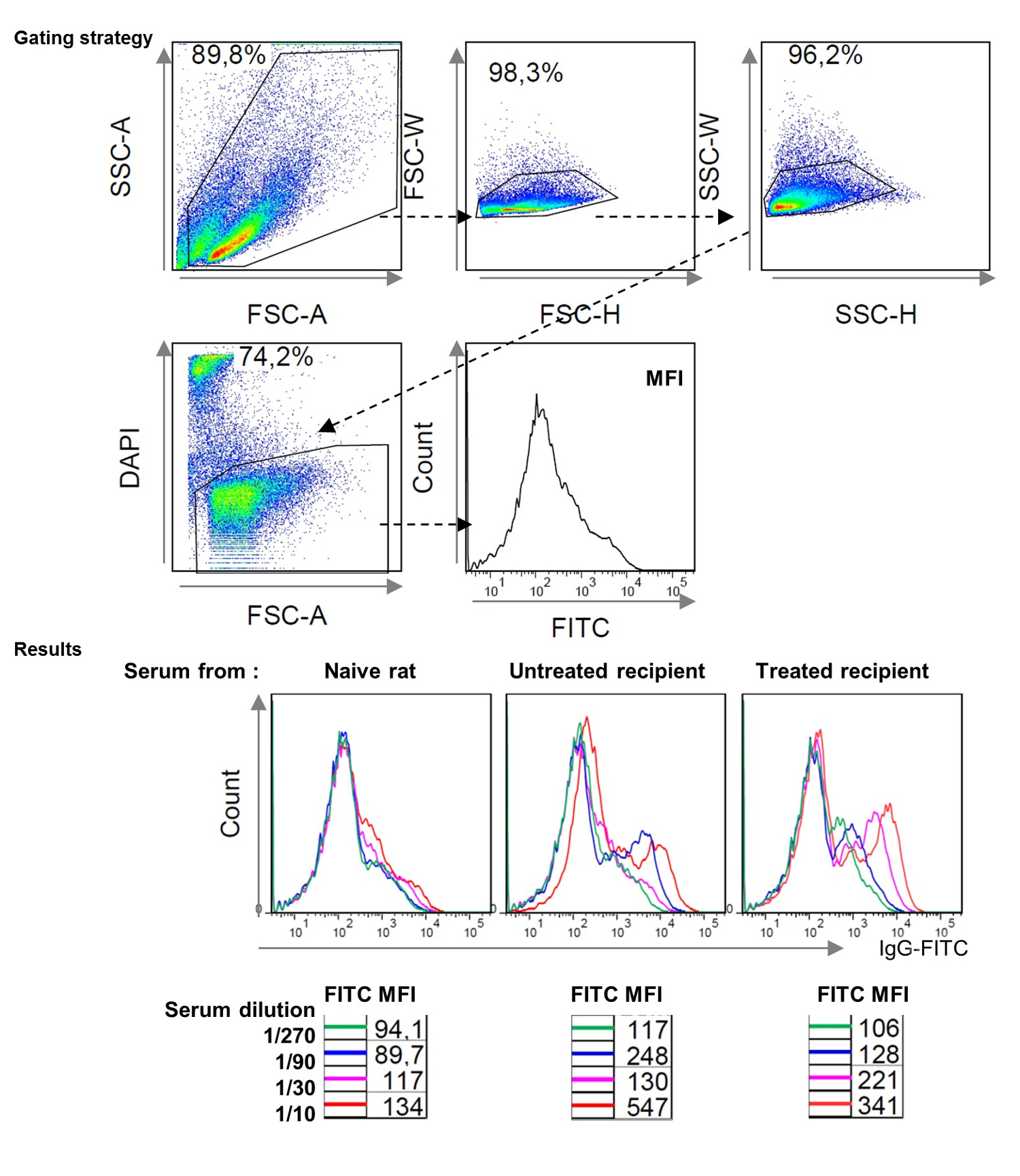 In Vitro And In Vivo Assessment Of T B And Myeloid Cells