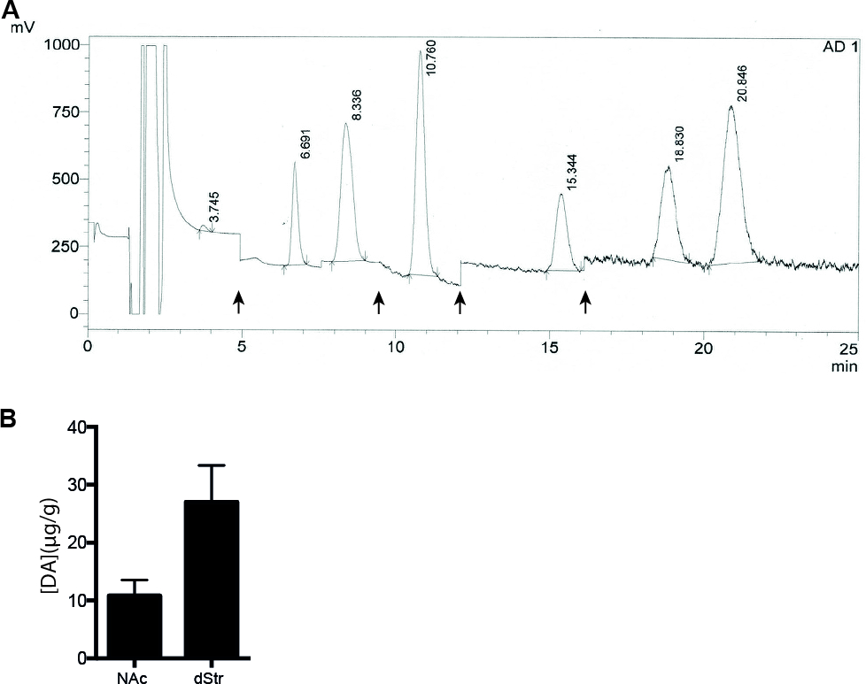 Assessment of Dopaminergic Homeostasis in Mice by Use of