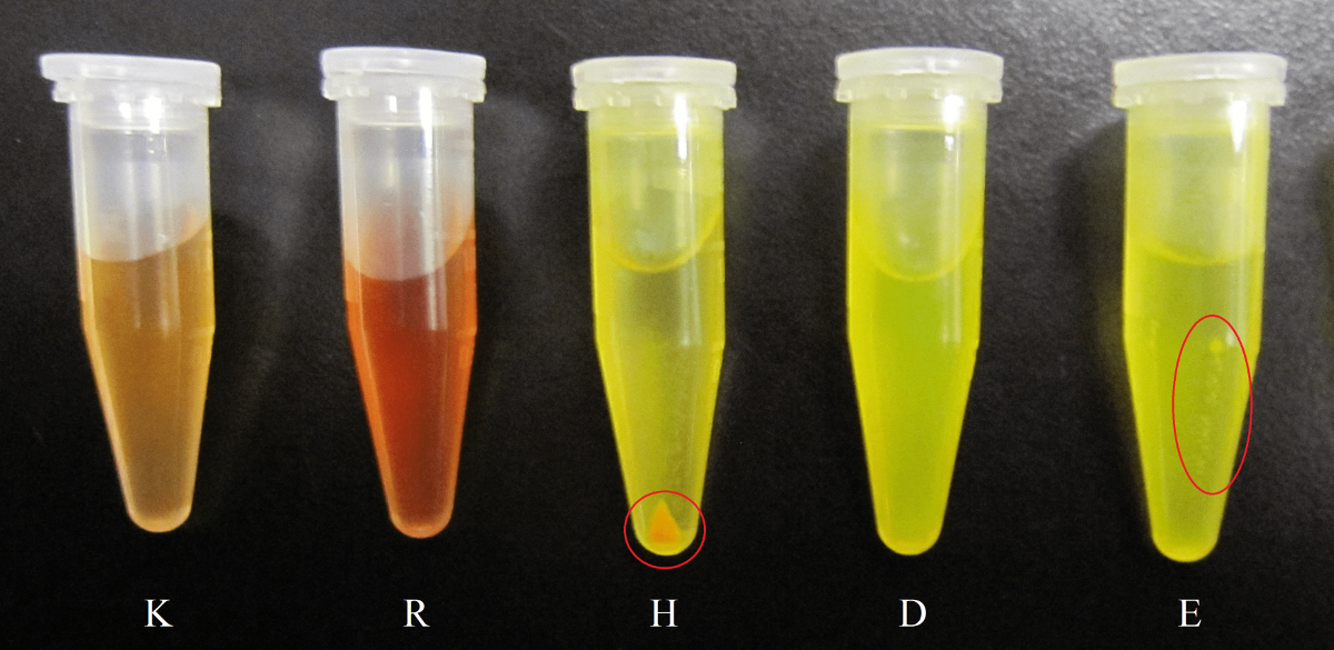 Solubility of Hydrophobic Compounds in Aqueous Solution Using