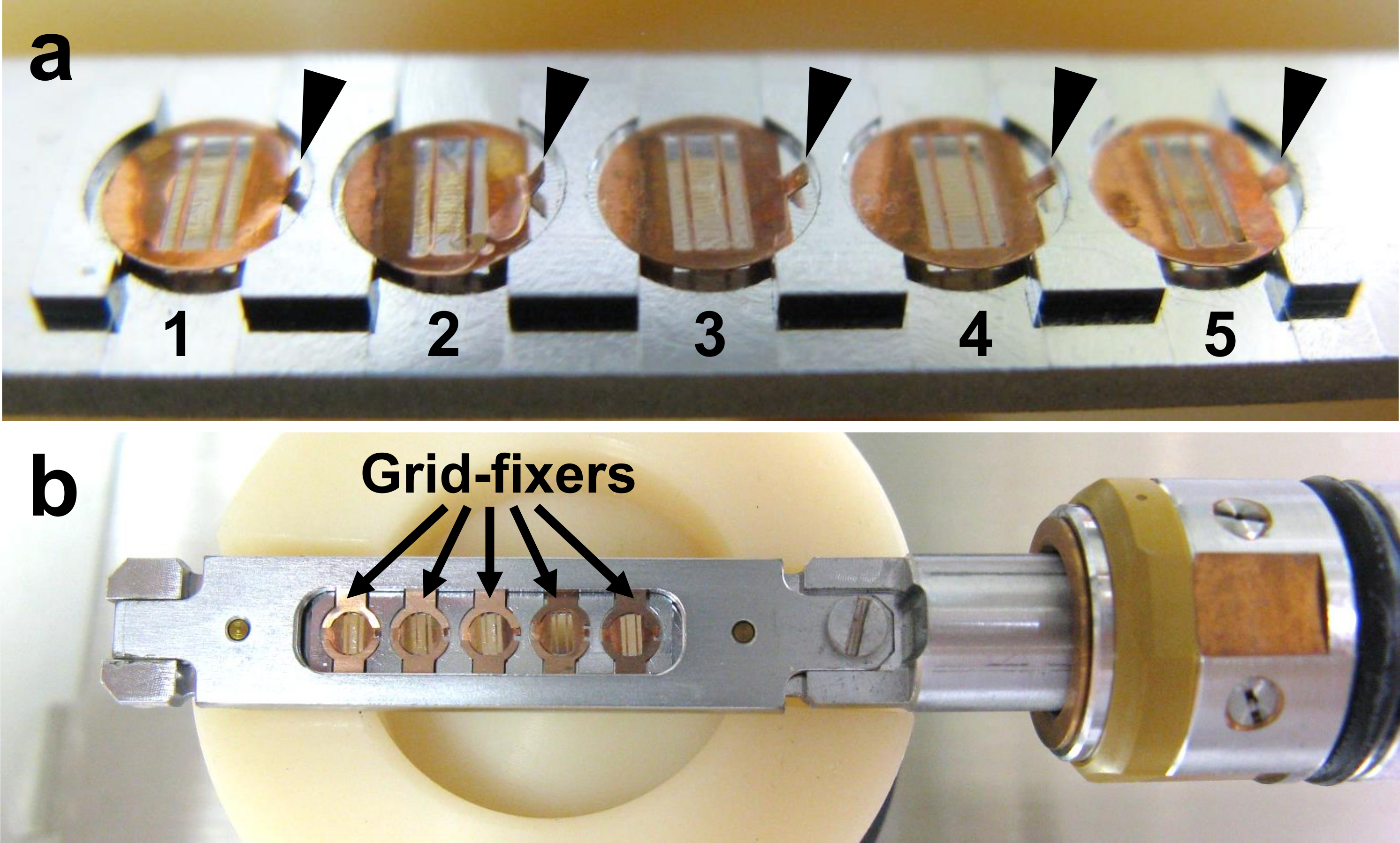 A Method for Obtaining Serial Ultrathin Sections of Microorganisms
