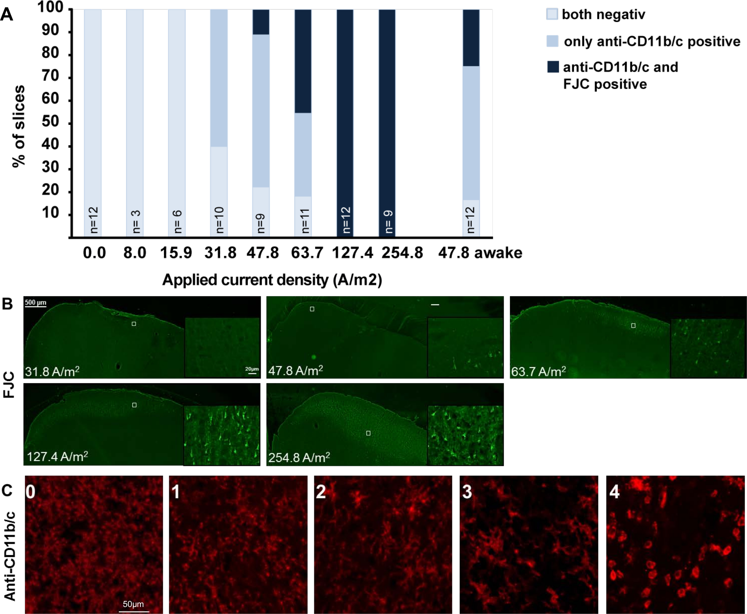 Transcranial Electrical Brain Stimulation in Alert Rodents | Protocol