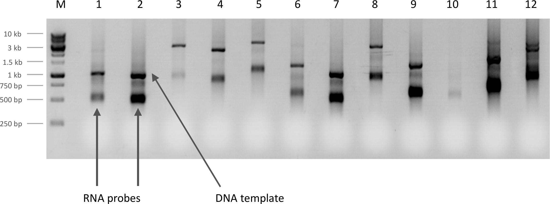 High Resolution Fluorescent In Situ Hybridization in