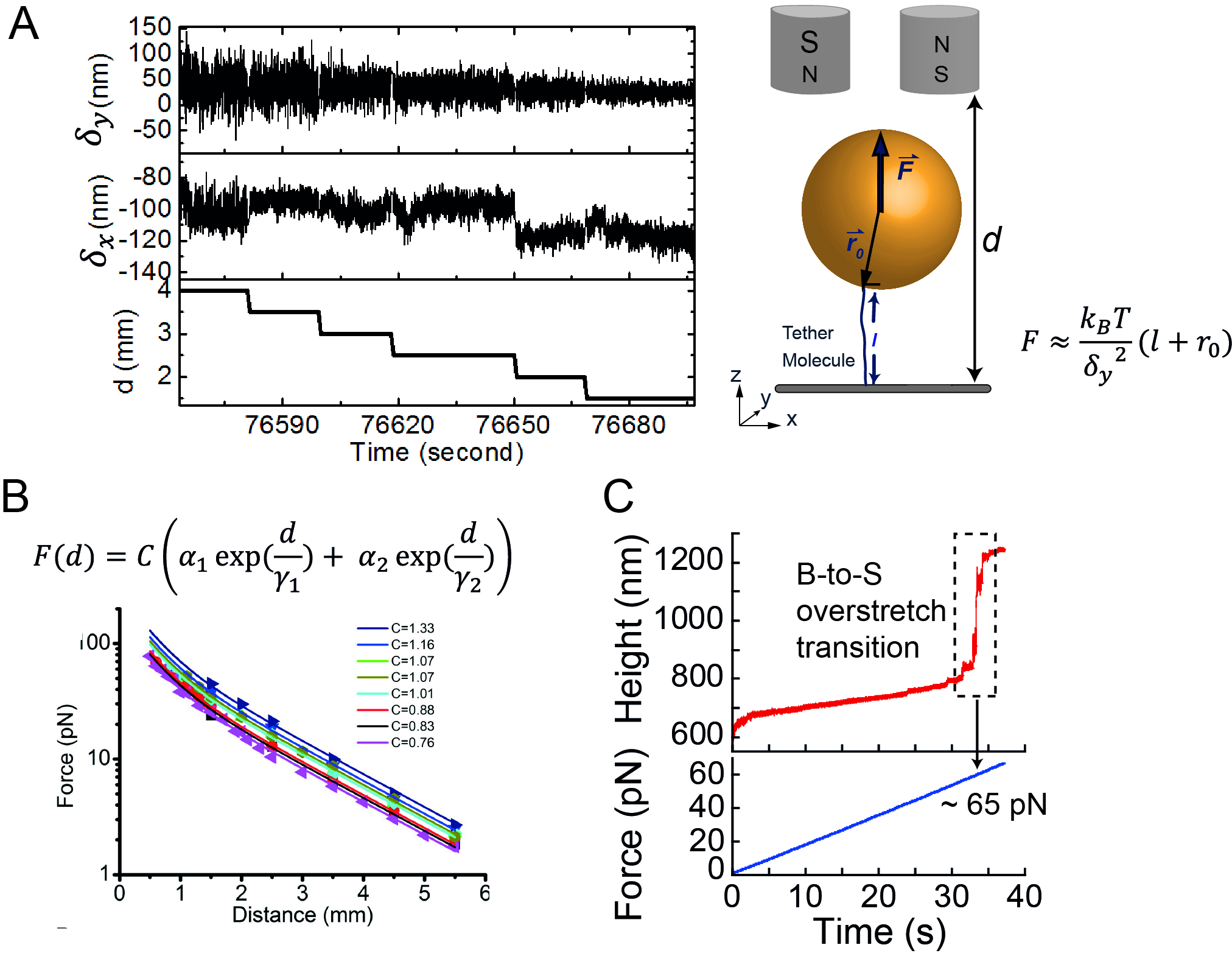 Single-molecule Manipulation of G-quadruplexes by Magnetic Tweezers