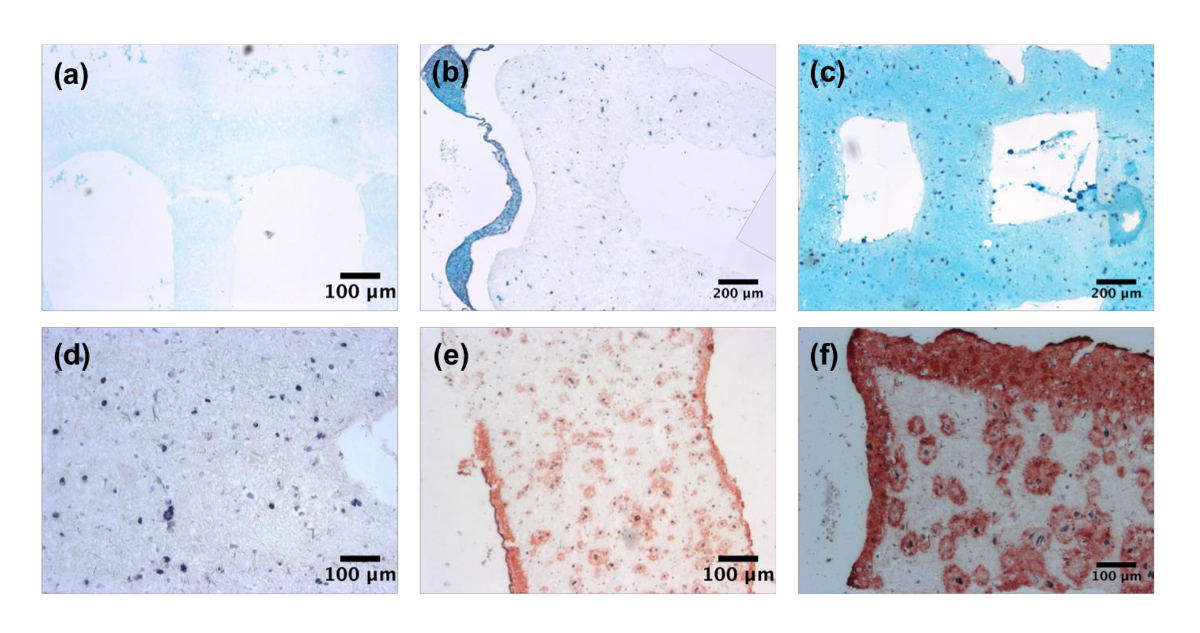 Bioprinting of Cartilage and Skin Tissue Analogs Utilizing a Novel