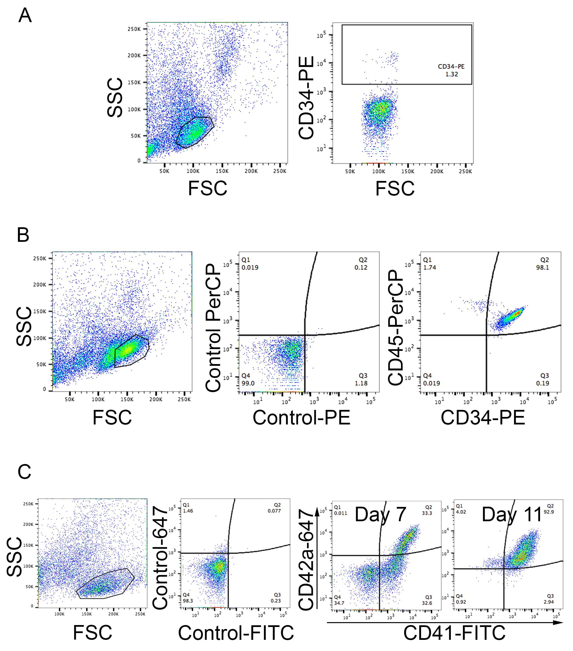 Megakaryocyte Differentiation and Platelet Formation from Human Cord