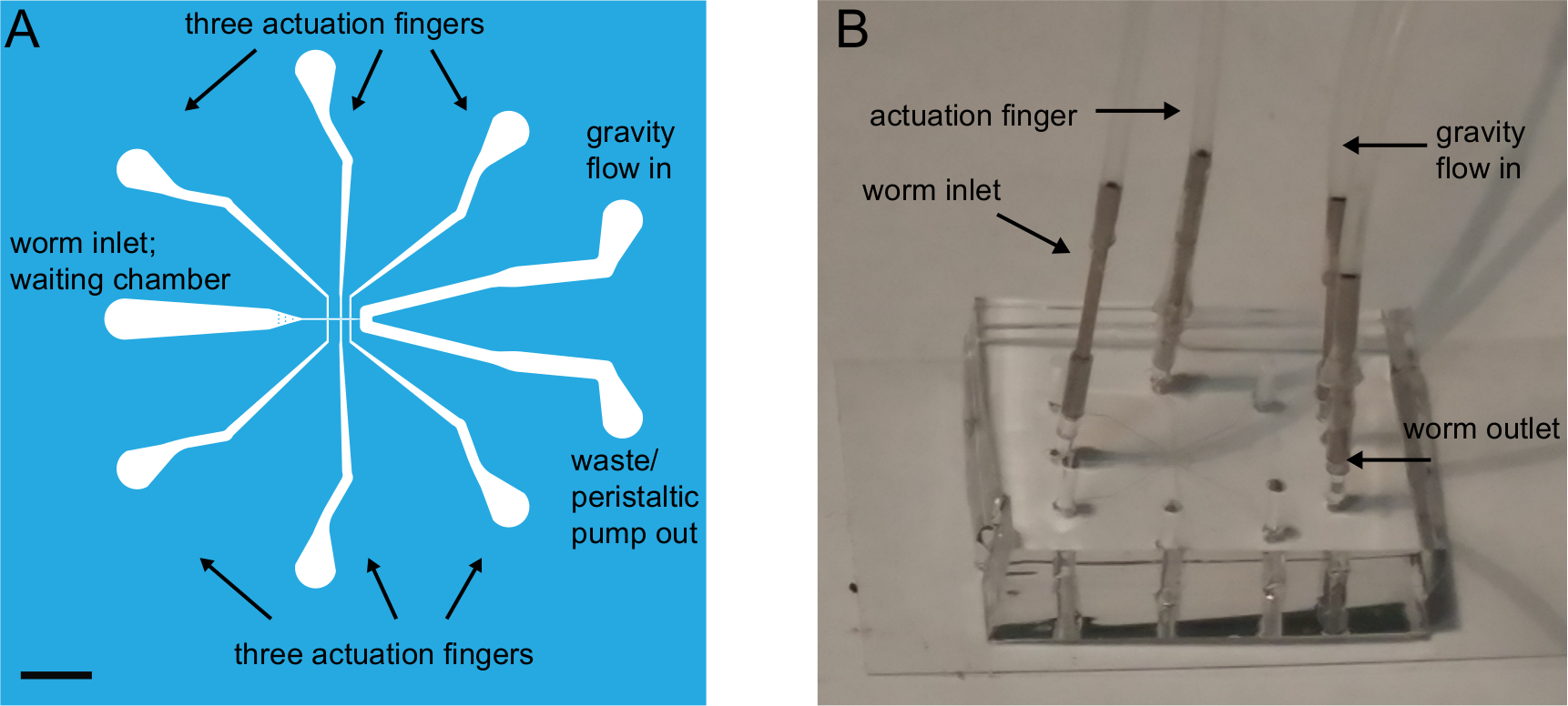 Using a Microfluidics Device for Mechanical Stimulation and