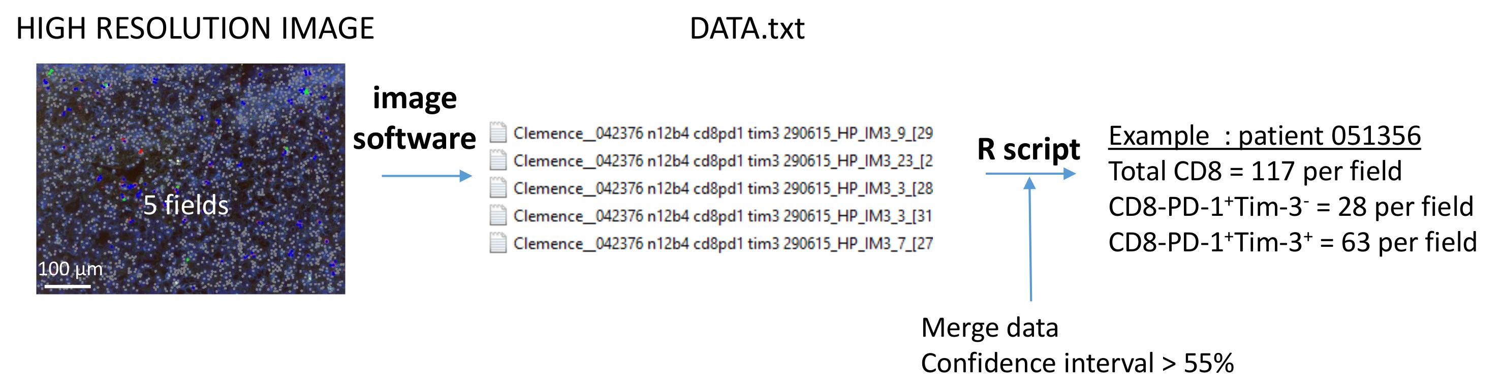 Multiplexed Immunofluorescence Analysis and Quantification