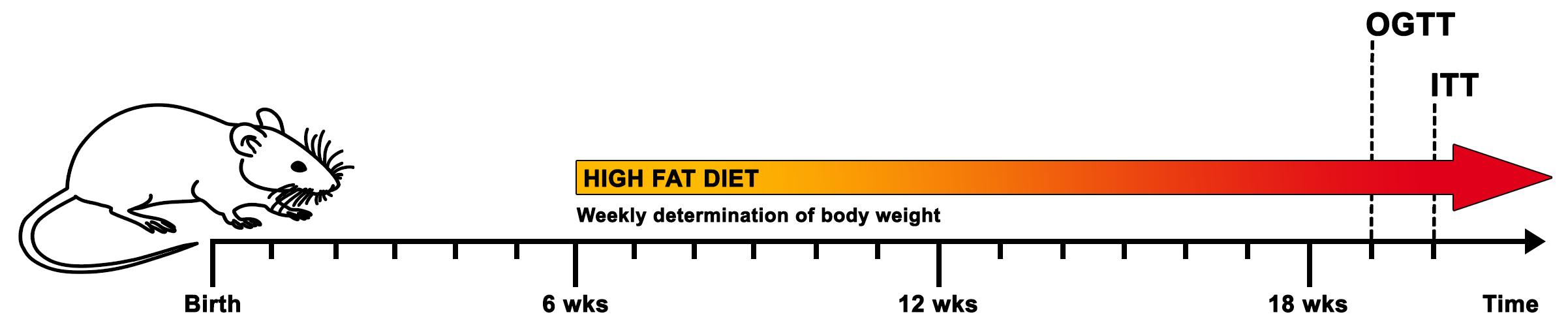 diabetes tipo II inducida por la dieta en ratones c57bl / 6