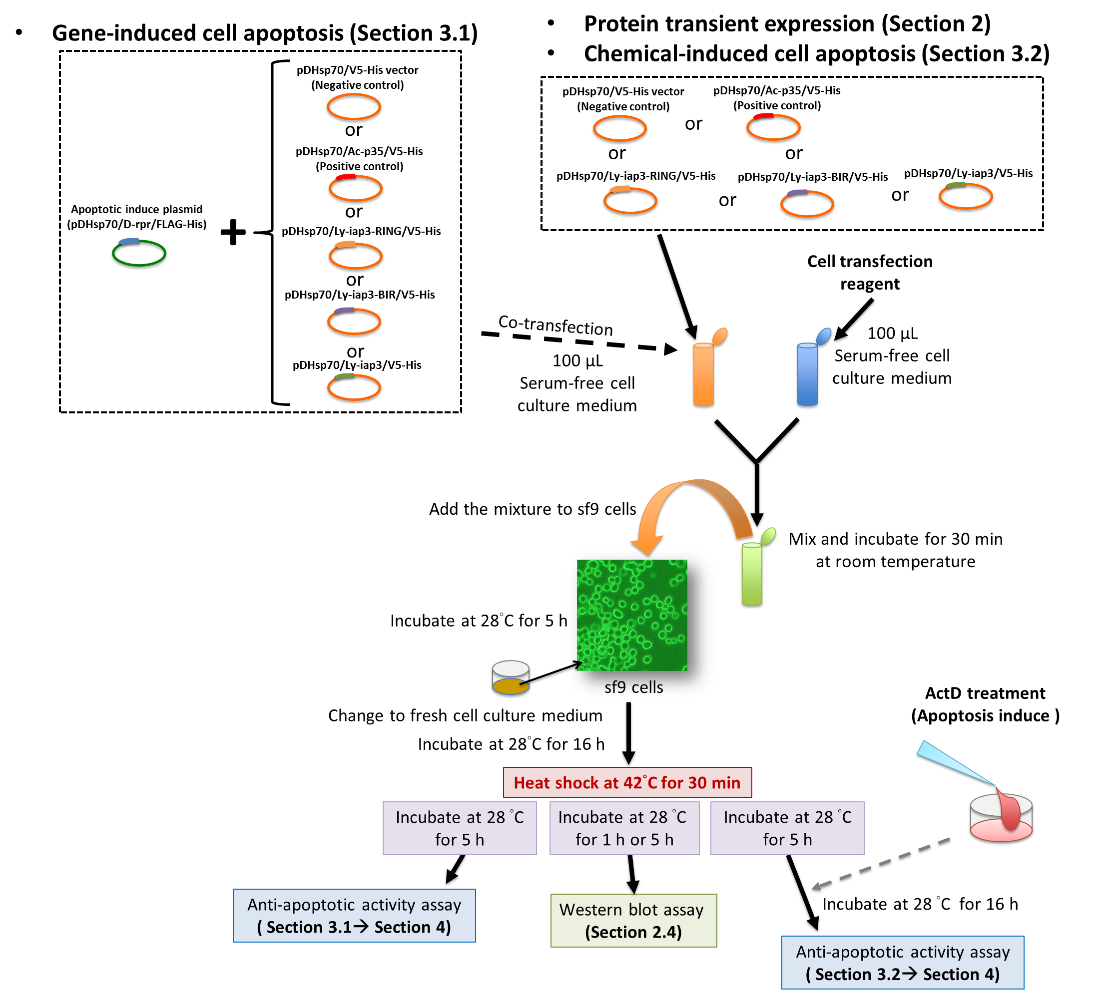 Celler lager proteiner