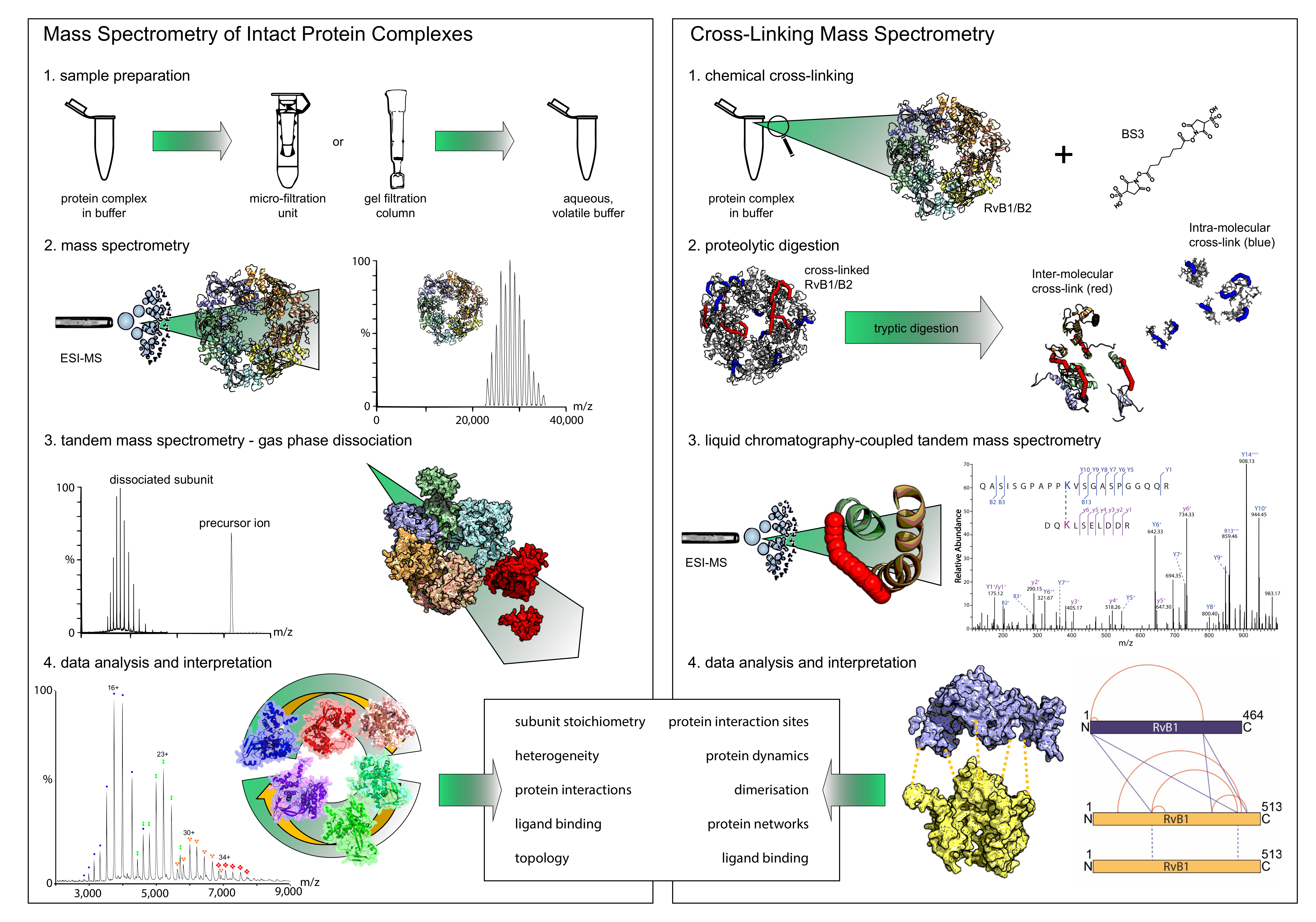 Combining Chemical Cross-linking and Mass Spectrometry of Intact