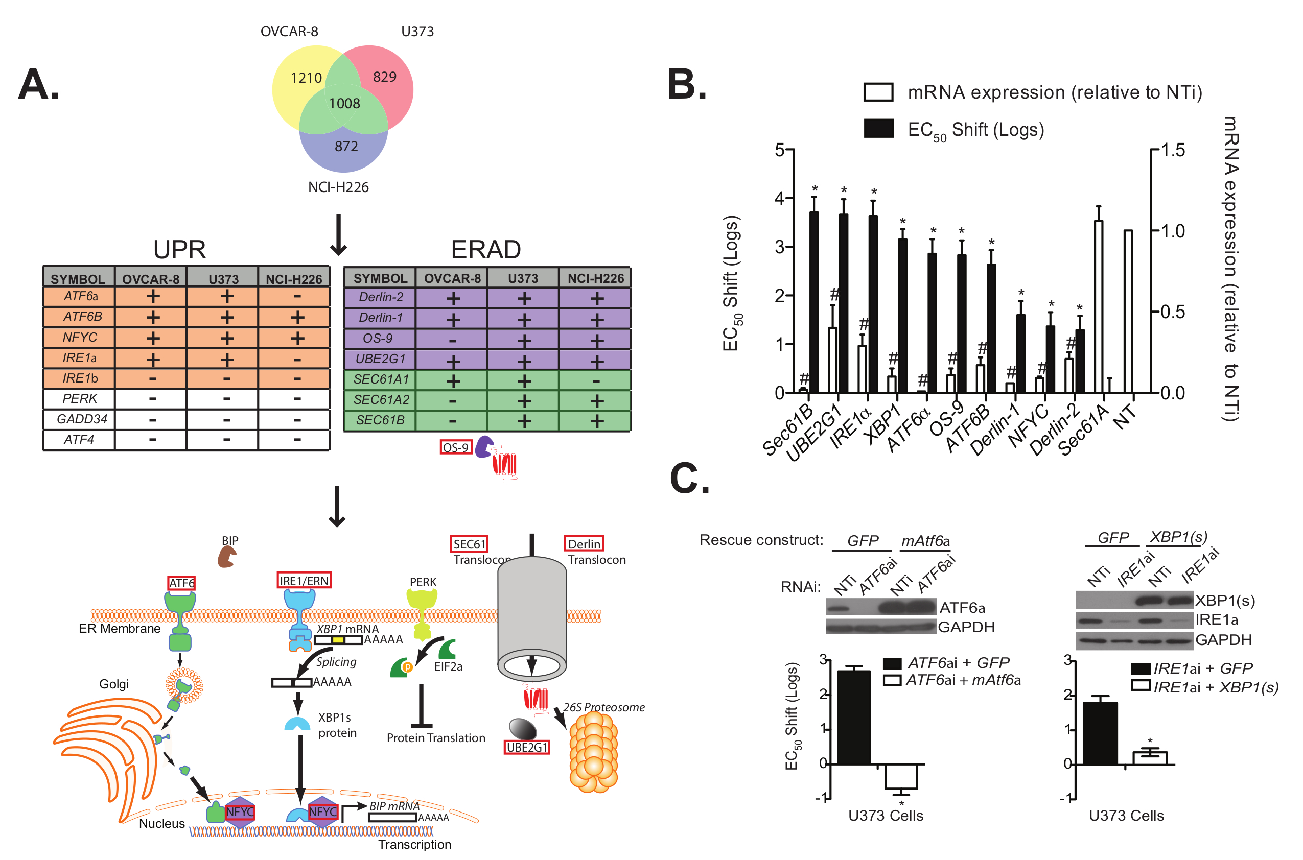 Genome-wide RNAi Screening to Identify Host Factors That