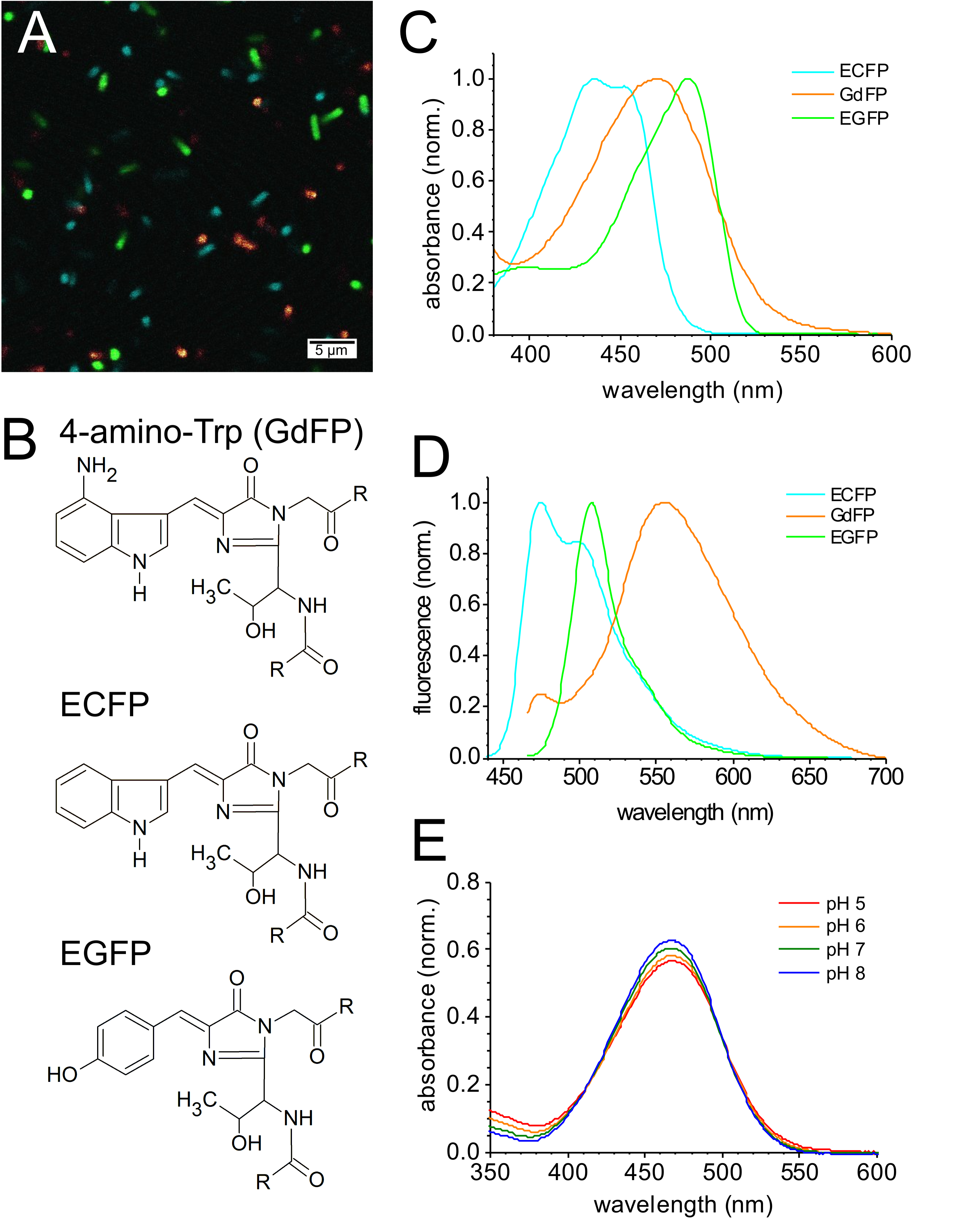 Engineering 'Golden' Fluorescence by Selective Pressure