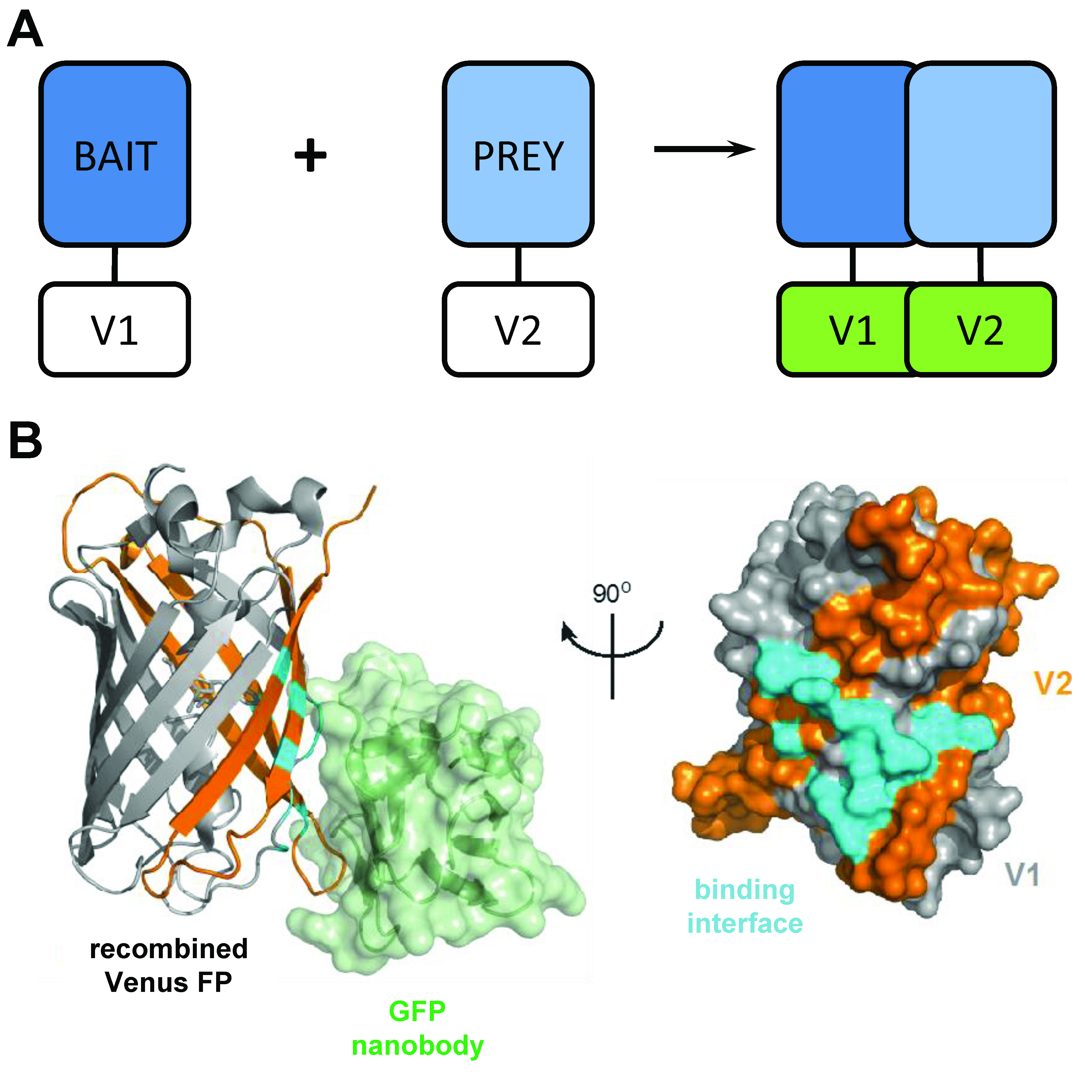 Dissecting Multi-protein Signaling Complexes by Bimolecular