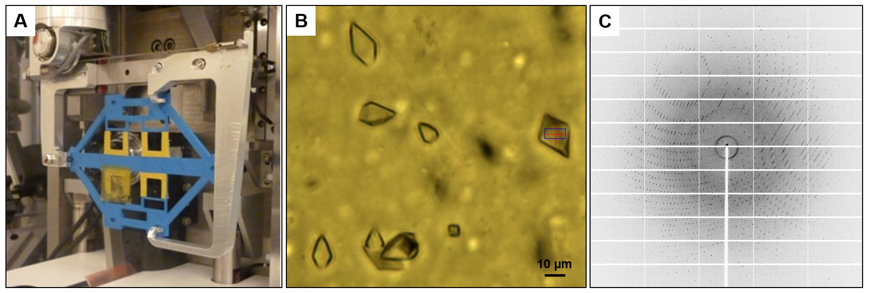 Microfluidic Chips for In Situ Crystal X-ray Diffraction and In Situ