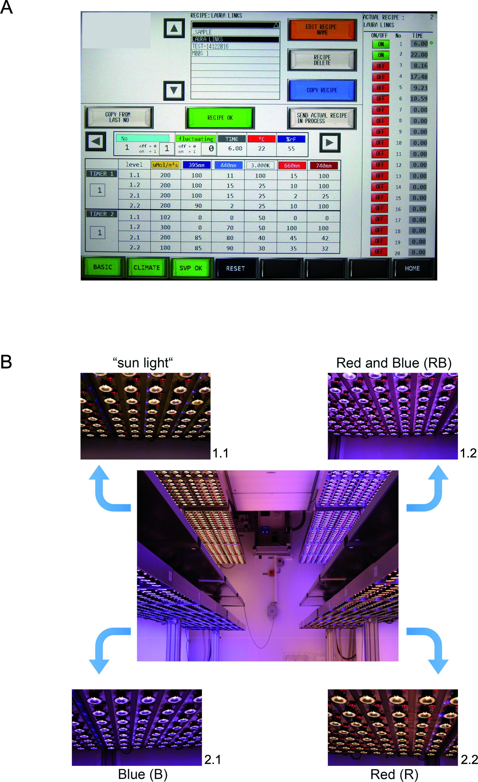 Analysis of Arabidopsis thaliana Growth Behavior in