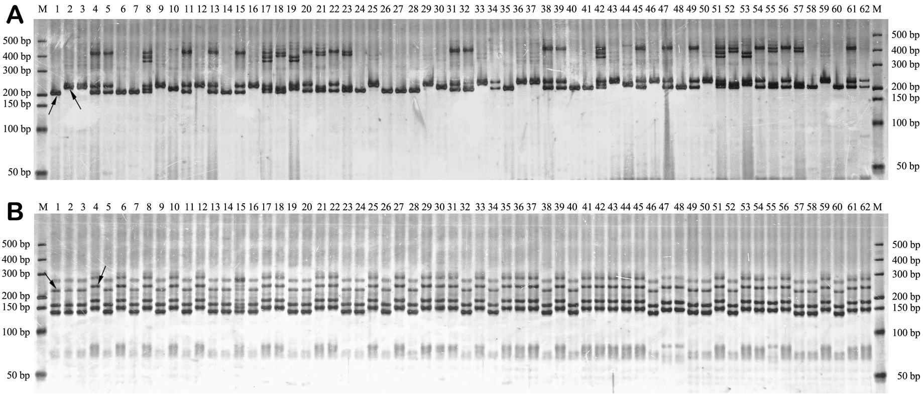 A Fast Silver Staining Protocol Enabling Simple and Efficient