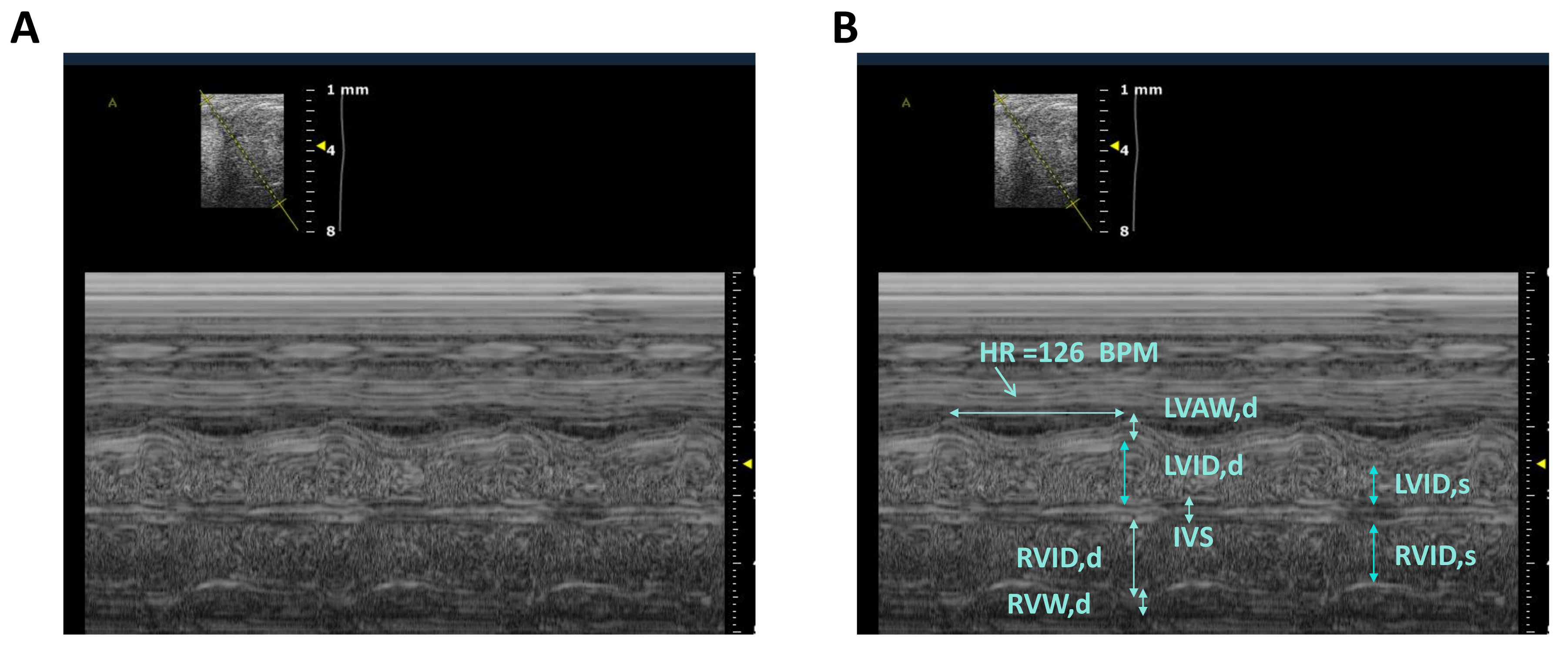 Fetal Mouse Cardiovascular Imaging Using a High-frequency