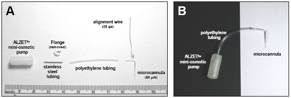 Assembly of the microinfusion system. (A) The components of the system placed in their relative positions for assembly. Note the flange from the flow modulater tubing has been broken away. We recommend the alignment wire be secured just before implantation (see text). (B) Assembled microinfusion system prior to attachment of alignment wire and implantation.