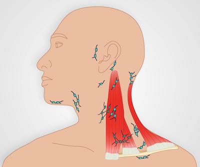 Lymph Node Exam | Protocol