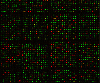 Expression Profiling with Microarrays thumbnail