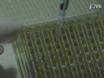 La preparazione di colture primarie di cellule emopoietiche dal midollo osseo murino per elettroporazione thumbnail