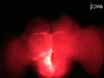 <em>In vivo</em> Ca <sup>2 +</sup> - Beeldvorming van Mushroom Body neuronen tijdens Olfactorische Leren in de Honey Bee thumbnail