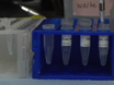 RNA Isolation from Embryonic Zebrafish and cDNA Synthesis for Gene Expression Analysis thumbnail