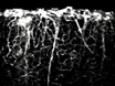 <em>In vivo</em> Imaging of Deep Cortical Layers using a Microprism thumbnail