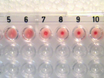 Determining the Reactivity and Titre of Serum using a Haemagglutination Assay thumbnail