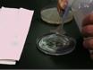 <em>In-vivo</em> Centrifugation of <em>Drosophila</em> Embryos thumbnail